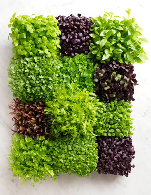 12 PRODUCE annette forrest food stylist -micro-herbs